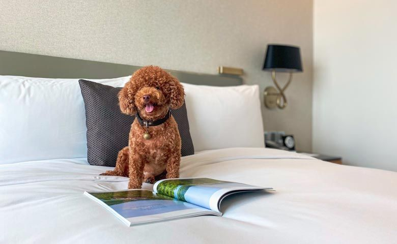 Warm hospitality for our furry guests at Oakwood Residence Saigon