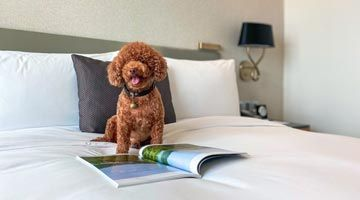 Enjoy special rates for your weekend stay with your pets, alongside other perks and amenities.